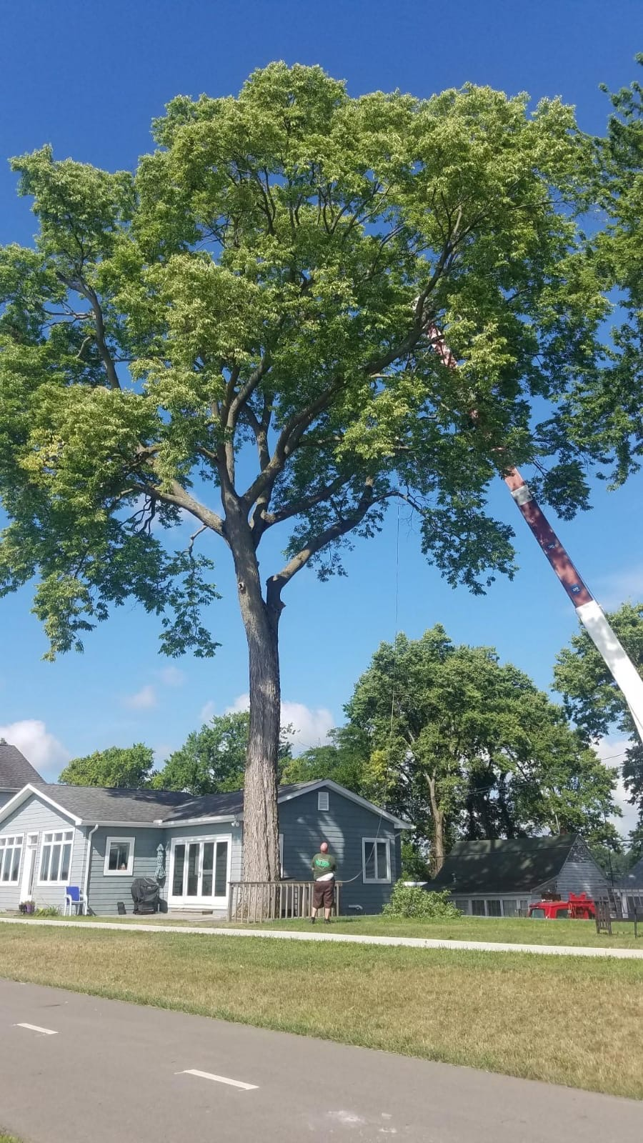 Tree Trimming Tips