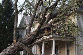 tree on home, storm damage, tree removal service